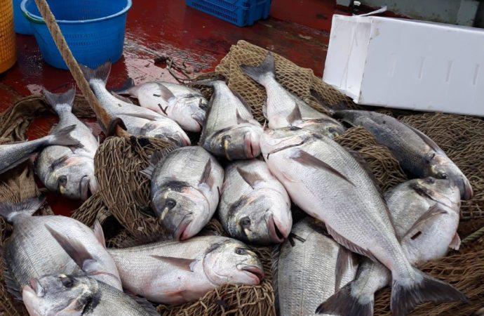 """Cepi presente al seminario """"Novità sul piano pluriennale delle cooperative per la pesca a strascico nel Mediterraneo"""""""
